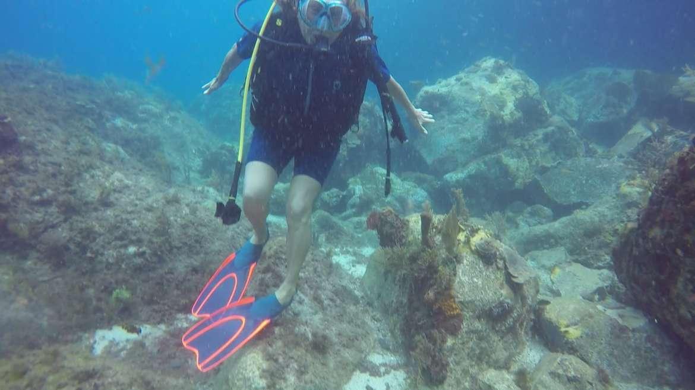 Regarder Cette tortue paisible sait que les plongeurs la respectent ! A Sainte Lucie et aux Grenadines où les gens mangent cet animal, les tortues se sauvent dès qu'on approche à moins d'une dizaine de mètres…