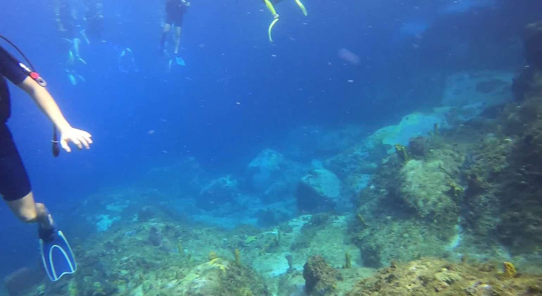 Regarder Baptêmes de plongée avec une belle tortue dès le départ, juste sous le catamaran ATAO Plongée !