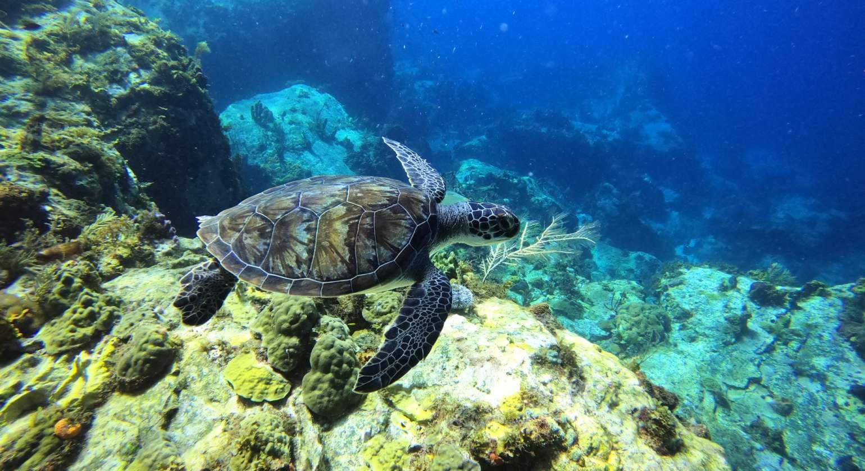 Welcome ! Merci la nature pour ces merveilleux moments en plongée avec les tortu…