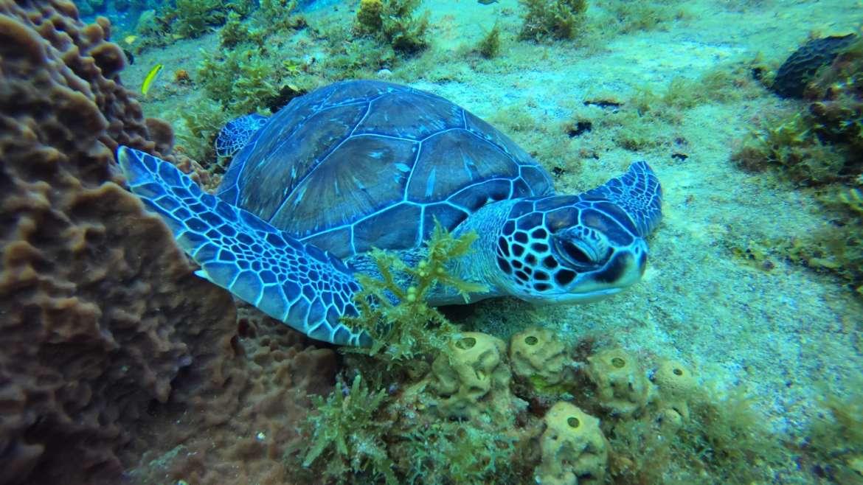 La tortue verte, cette merveille que j'adore !!! Merci la nature de nous offrir …